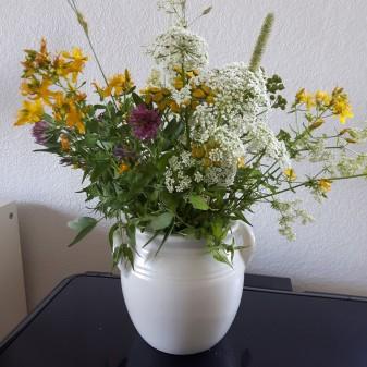 Wild flowers from my neighbourhood